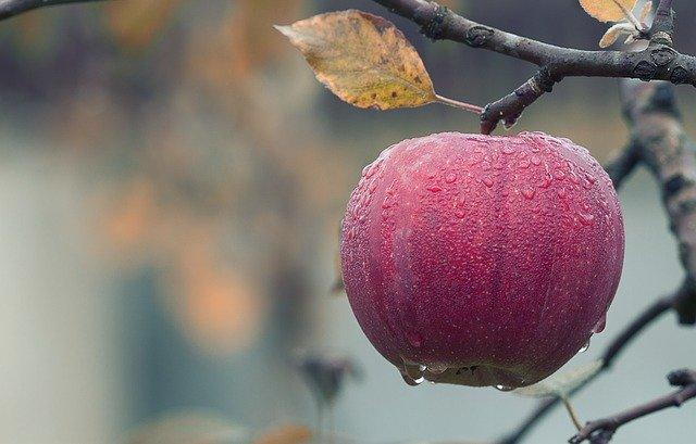Apple – żniwa z Pakistanu